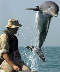A dolphin with a frickin' laser beam