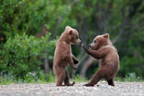 Kung Fu bear cubs