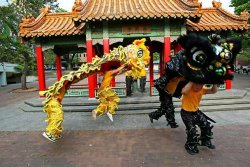 Lion and dragon dancing