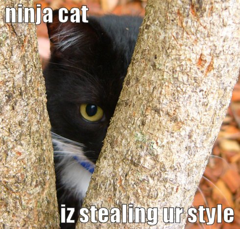ninja cat iz stealing ur style