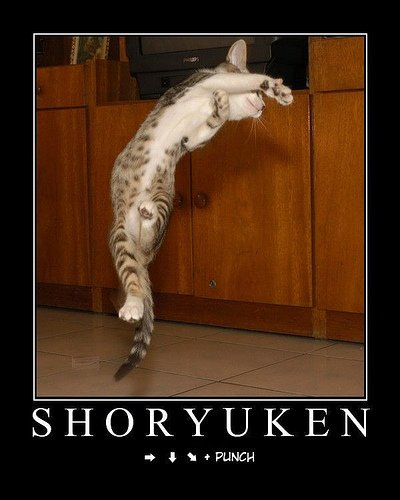 Shoryuken dragon punch cat